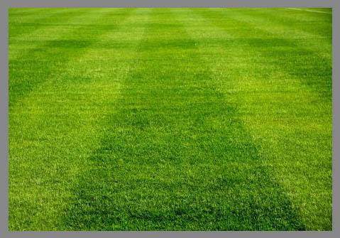 a rye grass Ryegrass